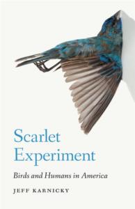 scarletexperiment